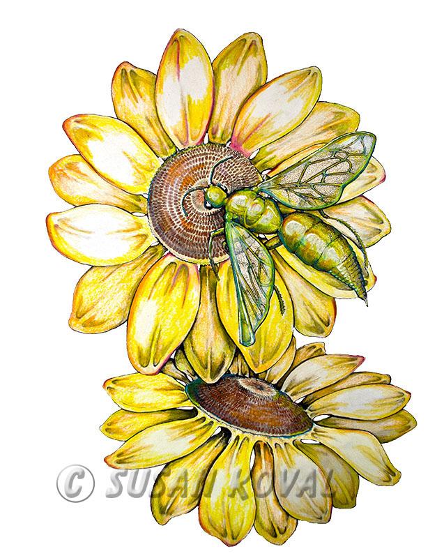 Bee Sun Flower